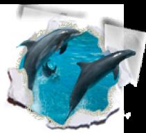 Shell Island & Dolphin Tours on Panama City Beach